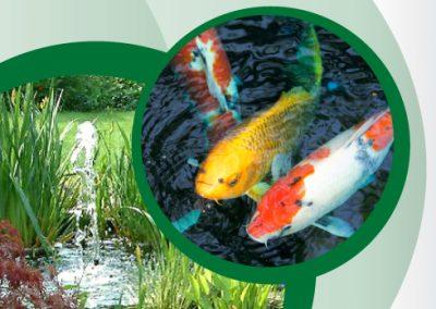 Ecopond Leaflet Design